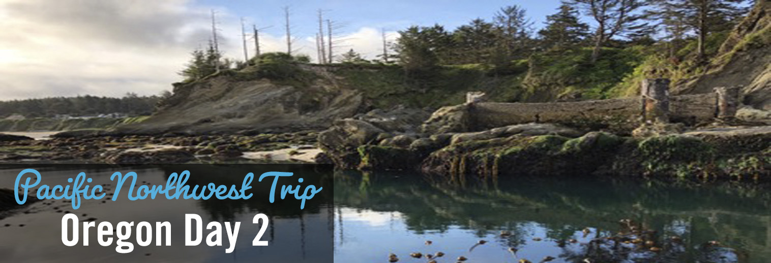 image of Oregon coast, pine trees, lake water, fallen logs, and rocky shoreline