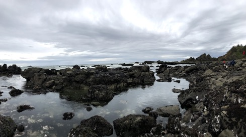 View of the intertidal zone