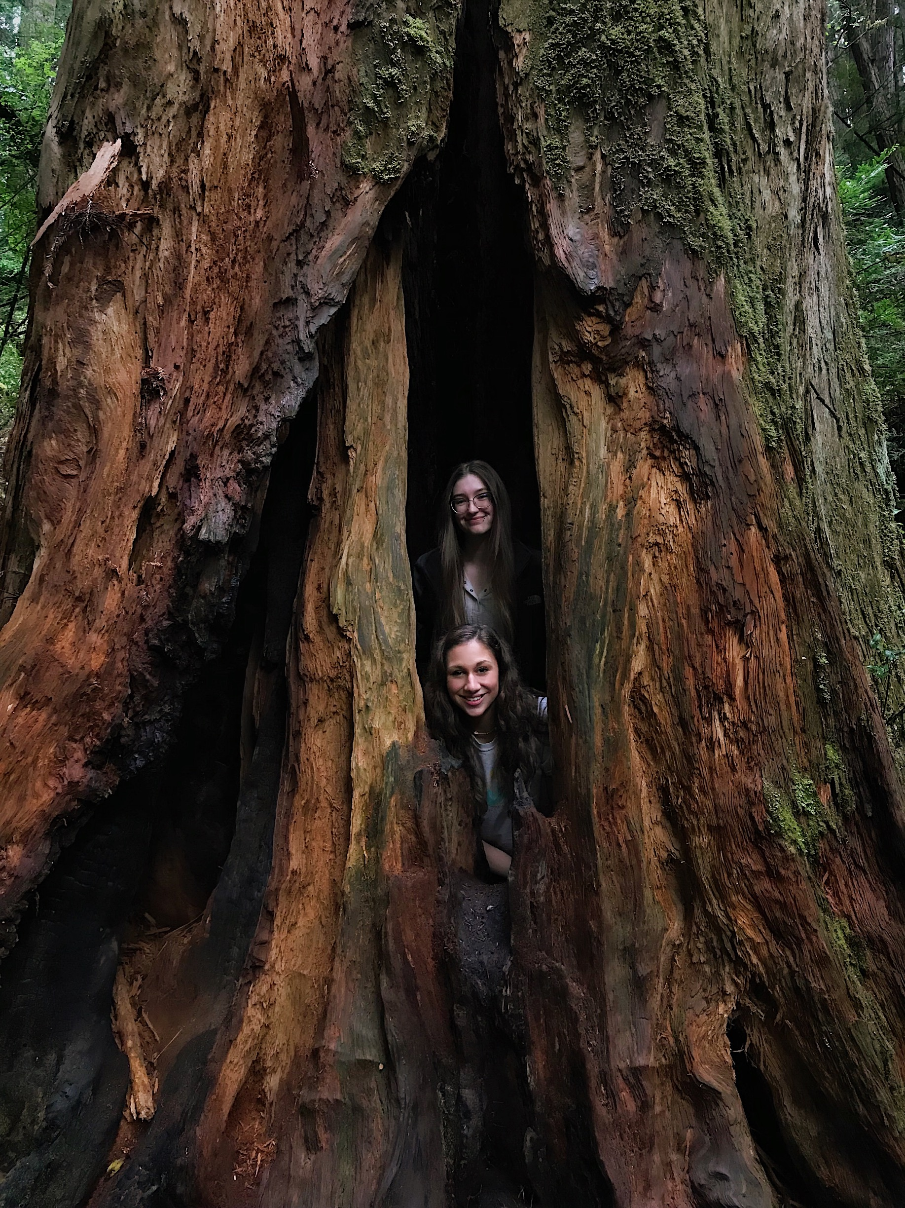 Morgan and Lauren in Redwood